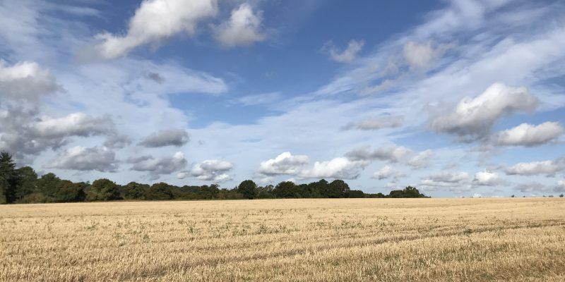 October - Field